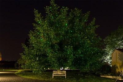Árbol iluminado con puntos verdes del proyector láser