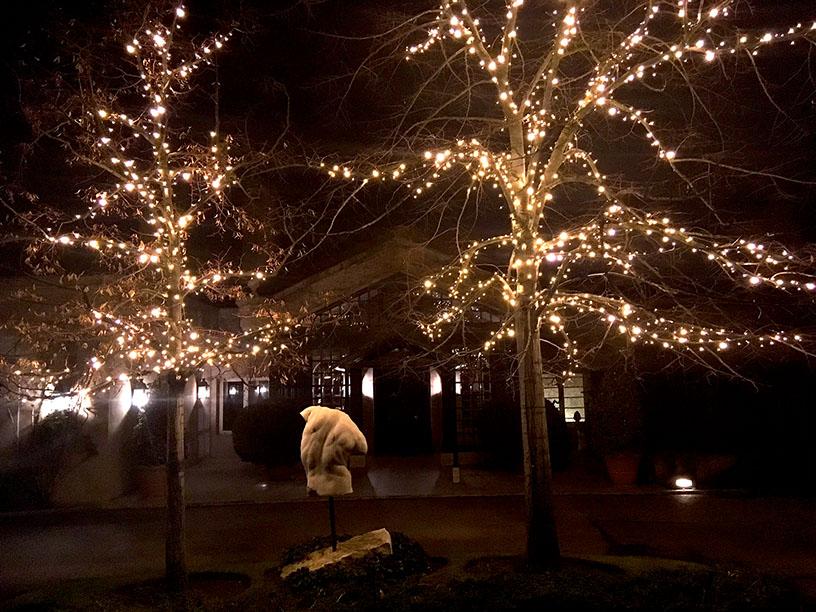 FOTO 7: Detalle de dos árboles del jardín con escultura de mármol
