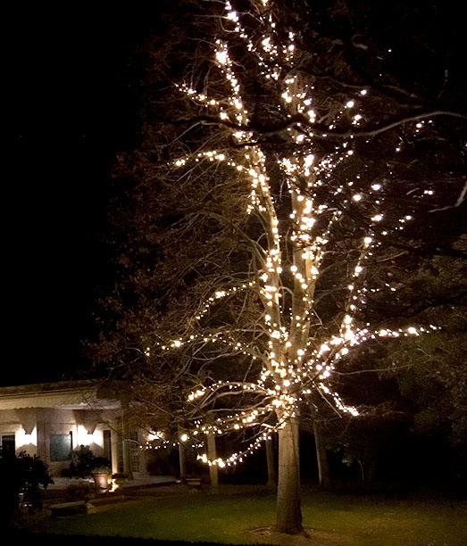 FOTO 6: Tilo con las luces encendidas en el jardín del chalet